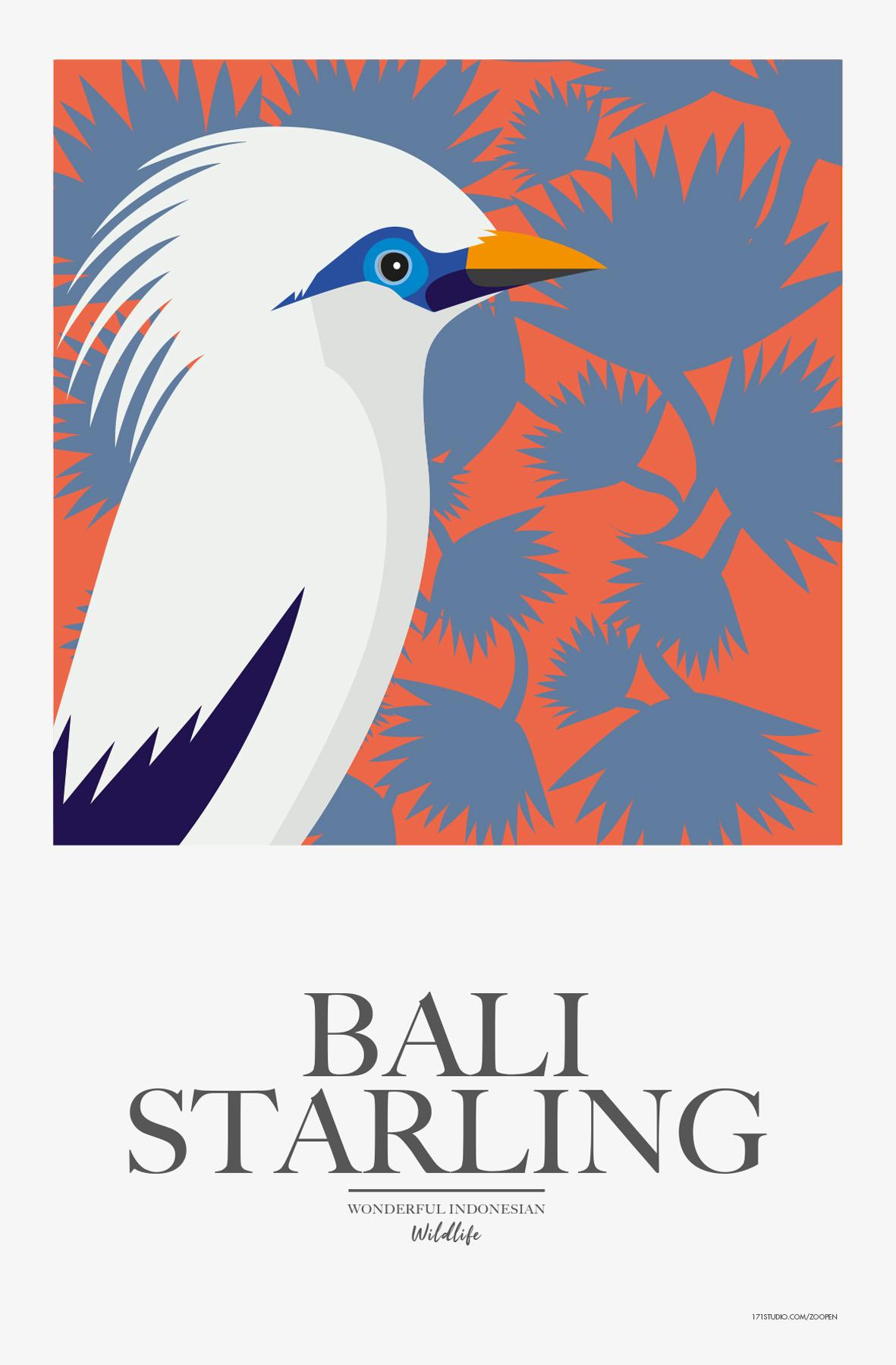 BaliStarling171studiomathieusechet