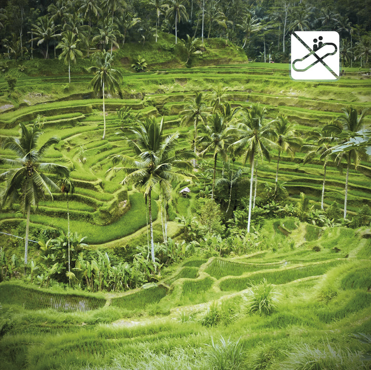 Book About Bali Welcome to Smisland Rice Field Elevator