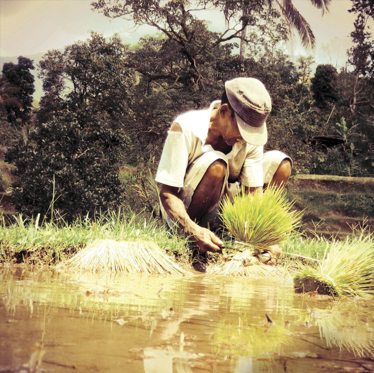 Book About Bali Welcome to Smisland Rice Field Worker Bali