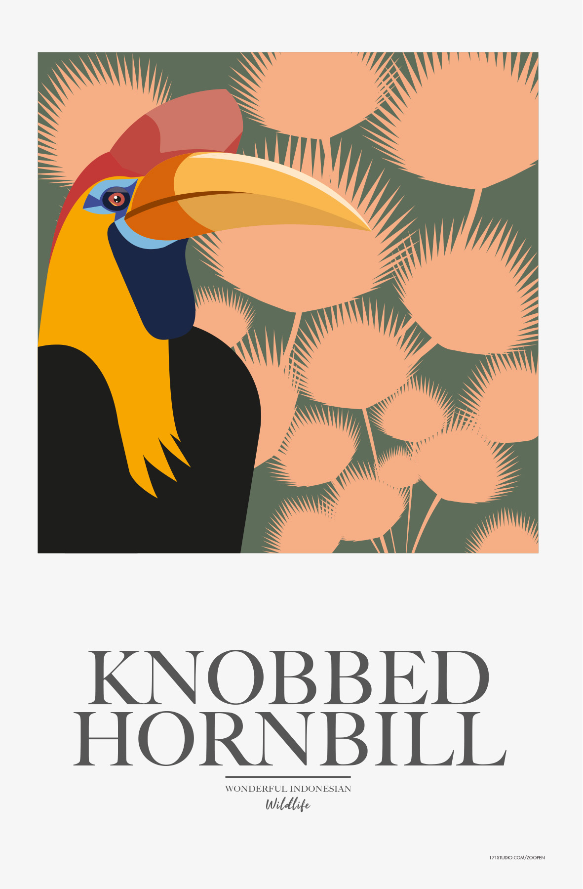 knobedhornbill171studiomathieusechet