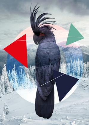 perroquetune